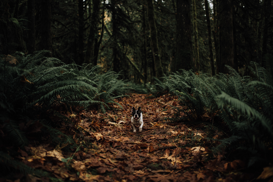 golden-ears-park-maple-ridge-dog
